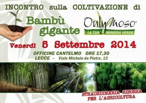 bambù IMMAGINE BANNER 1