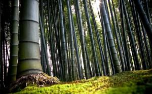 bambu'2
