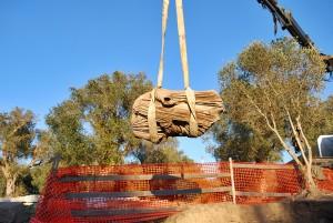 statua marmo Parco archeologico Rudiae