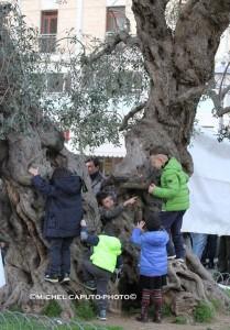 Lecce ulivo - #salviamogliulivi