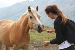 pet-therapy-cavallo